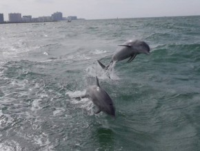 Jumping Dolphines